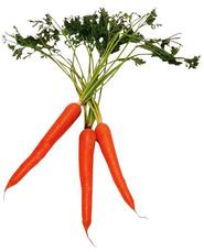 Carrot Bunch.jpeg